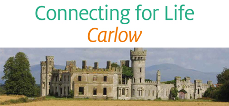 Cfl Carlow Launch Website News Header