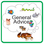 General Pet Safety Advice