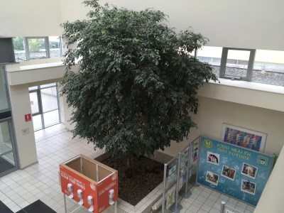 Tree at Main Entrance